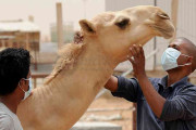 Arab Saudi Temukan Dua Kasus Baru MERS
