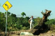 KPPA Buka Relawan Pemindah Pohon Asem