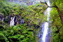 Pohon, Material Longsor Air Terjun Sesudo