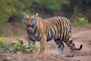 Wira Jadi Penghuni Baru Kebun Binatang Surabaya