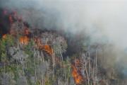 Perhutani Santuni Korban Tewas Hutan Ponorogo