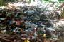 Meriset Sampah Pendapatan Jutaan Rupiah