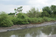 Pemkot Surabaya Buat Kesepahaman Mangrove