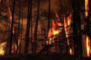 Aturan Kehutanan Indonesia Akan Semakin Kejam