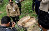 Greenpeace Gugat Pemerintah Soal Data Hutan