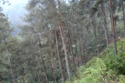 Warga Akan Tanami Hutan Carang Wulung