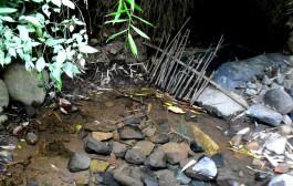 Perhutani Sepakat Selamatkan Hutan Dan Mata Air