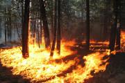 Greenpeace Minta Industri Segera Tanggulangi Api