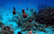 Bangsring Underwater Penggoda Jiwa Petualang