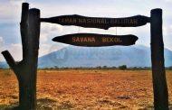 Situbondo Gelar Africa Van Java II
